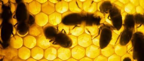 Missouri Pollinator Conservancy Program